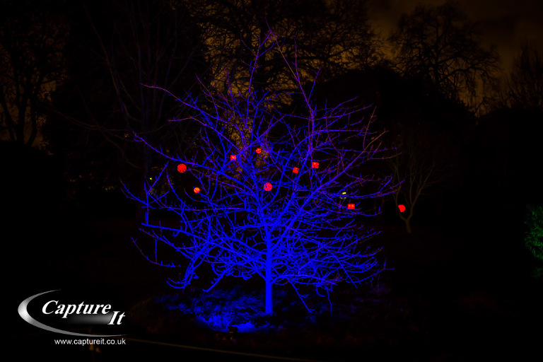syon-park-enchanted-woodland-03