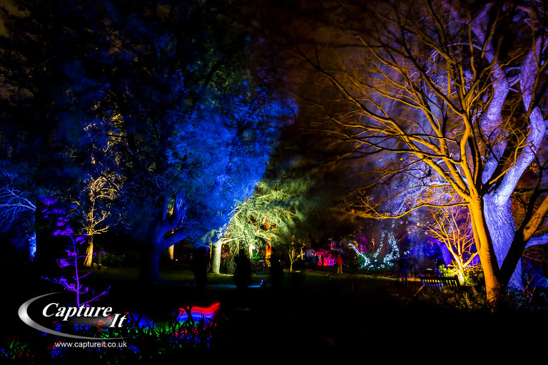 syon-park-enchanted-woodland-04