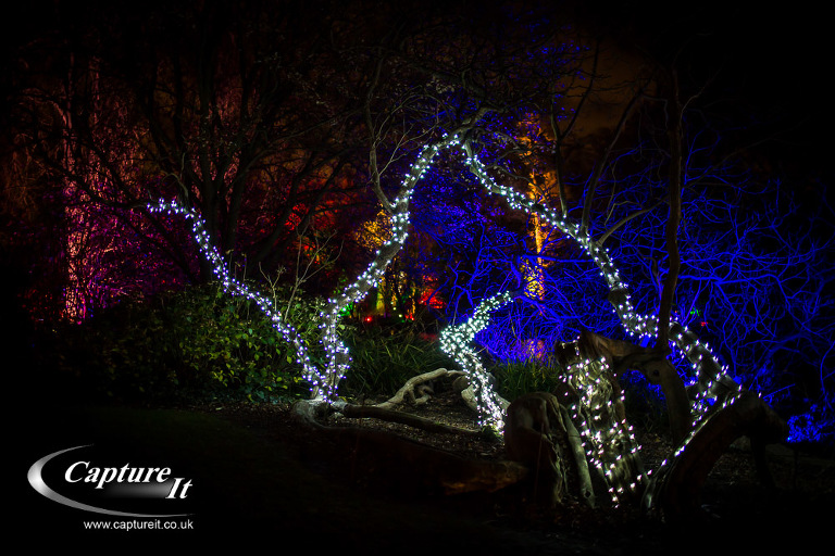 syon-park-enchanted-woodland-05